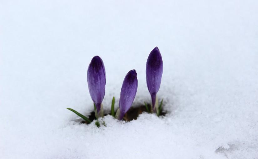 Zimowy Turbacz – 19 kwietnia 2015