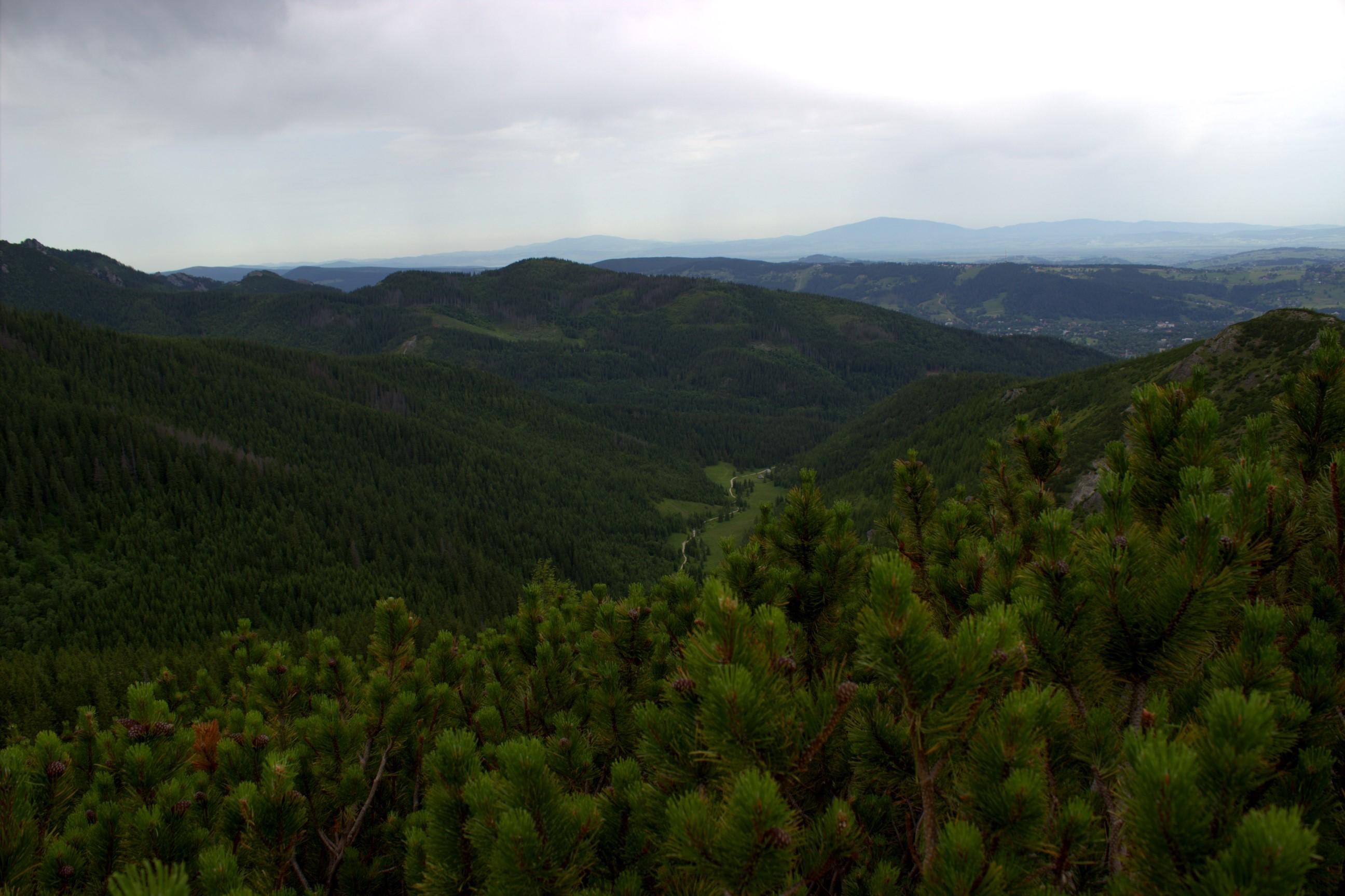 Na Przełęczy między Kopami. Widok na Dolinę Jaworzynki