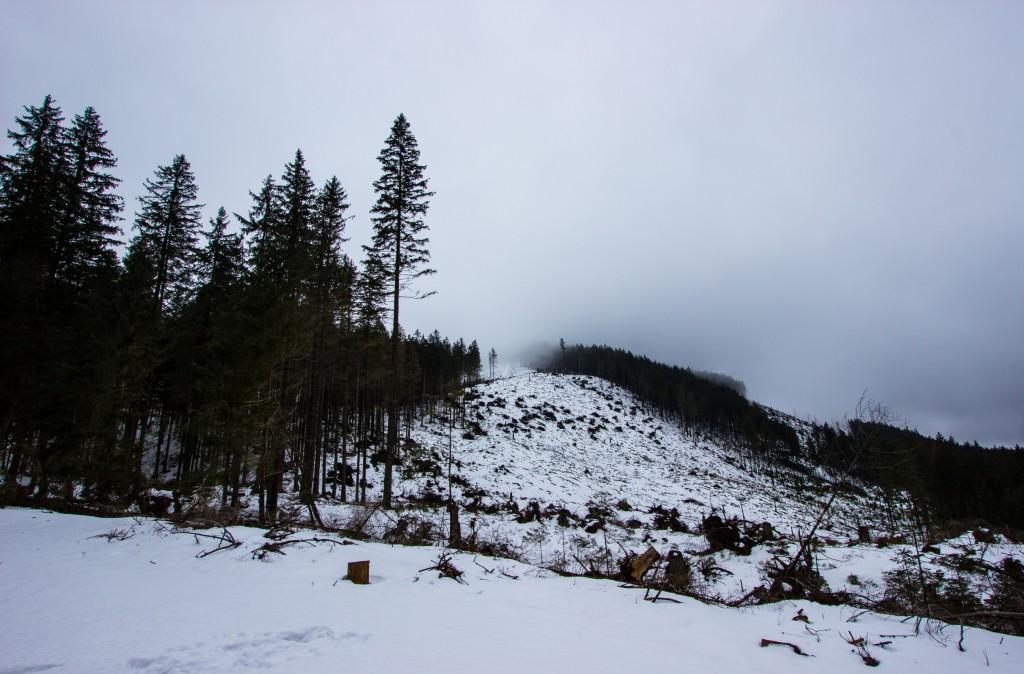 Na żółtym szlaku - Dolina Iwaniacka