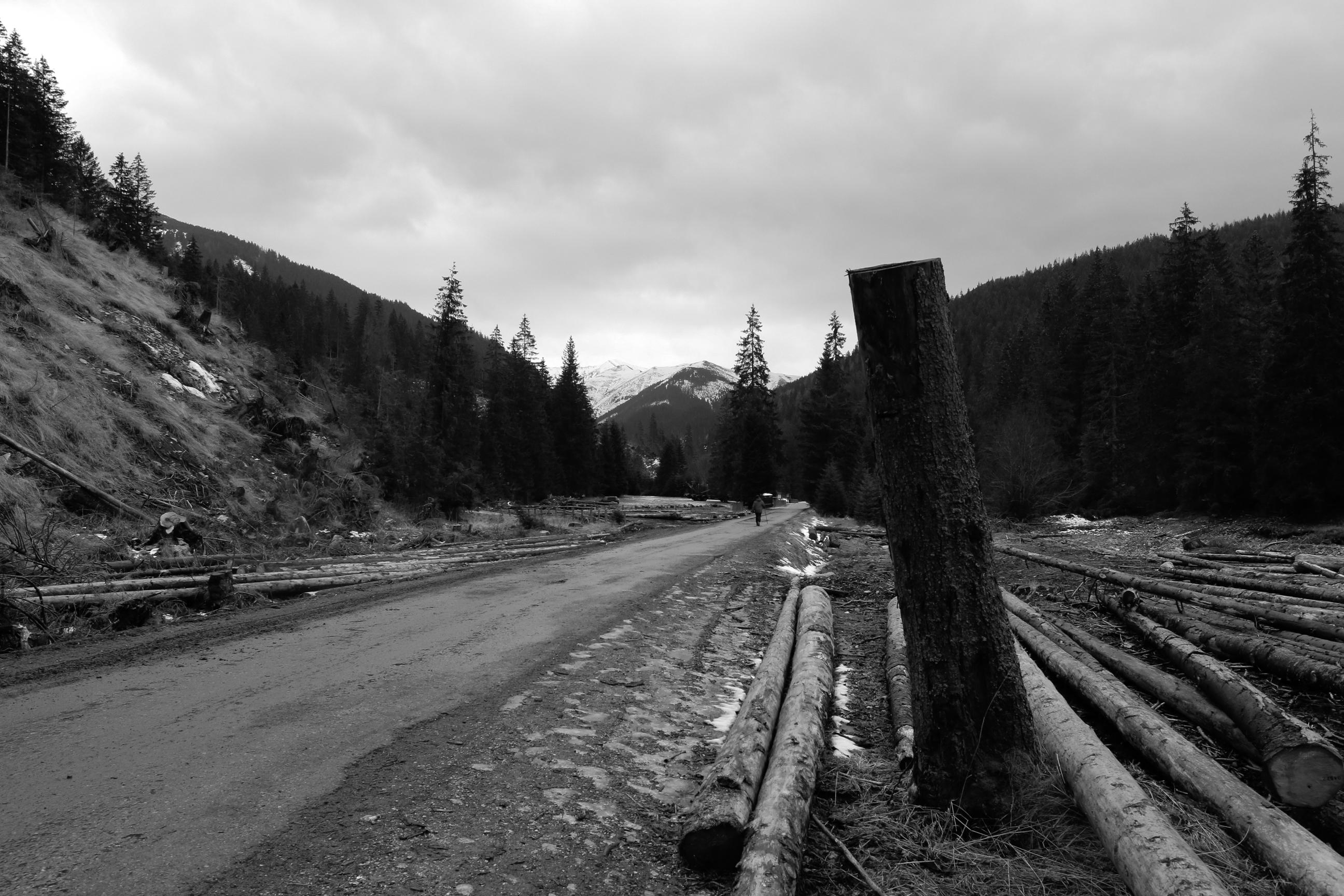 W drodze do Schroniska w Dolinie Chochołowskiej