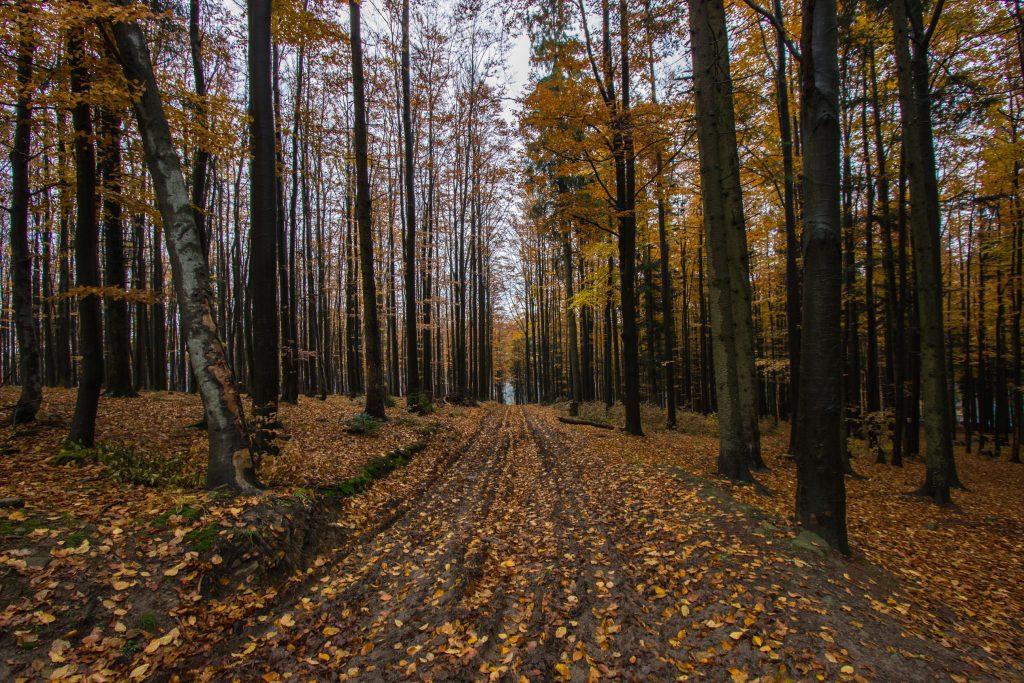 Beskid Żywiecki. Okolice Schroniska PTTK na Przegibku