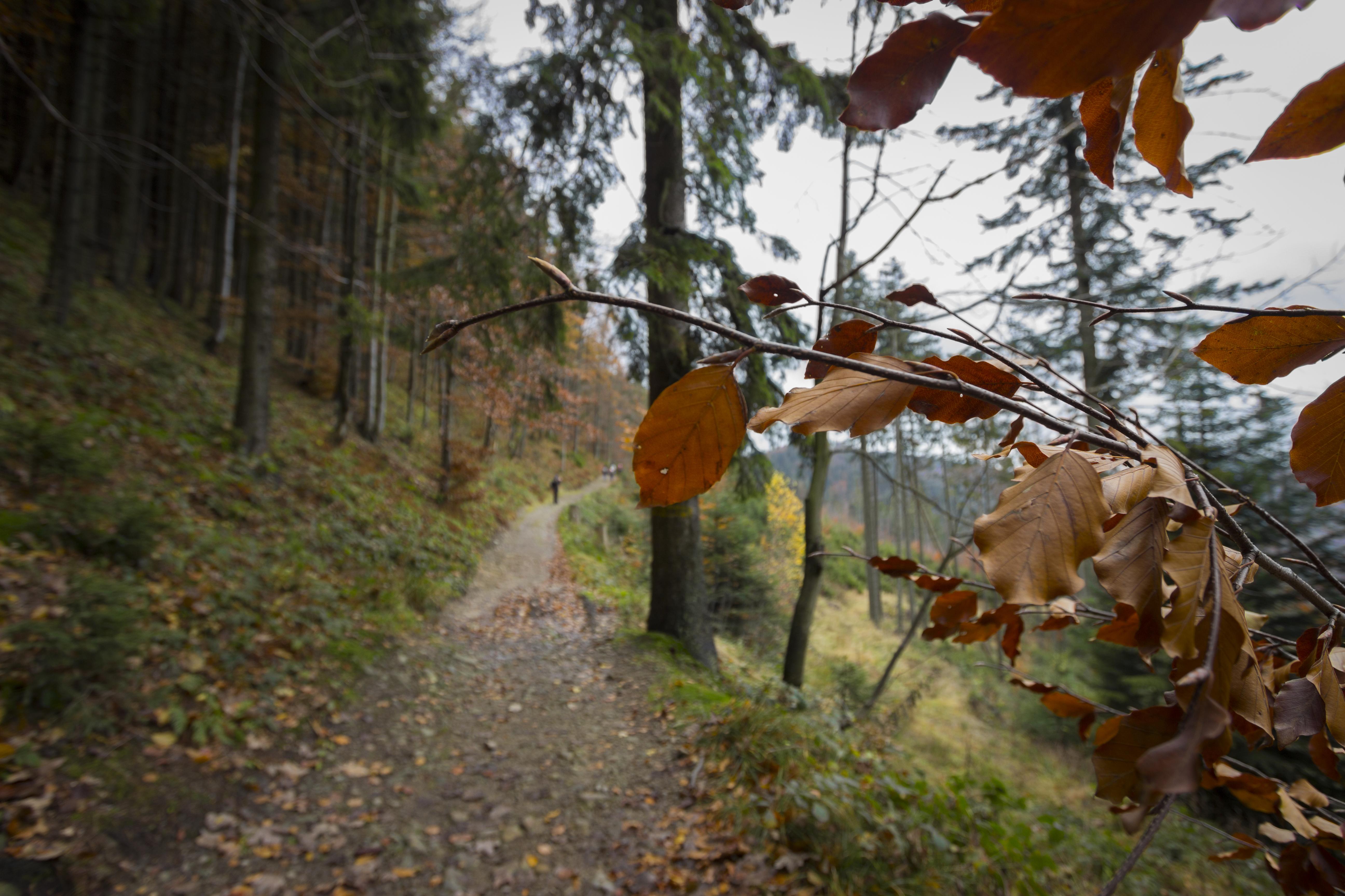 Beskid Żywiecki jesienią