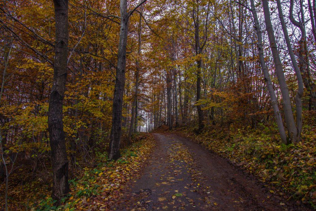 Beskid Żywiecki, okolice Zwardonia