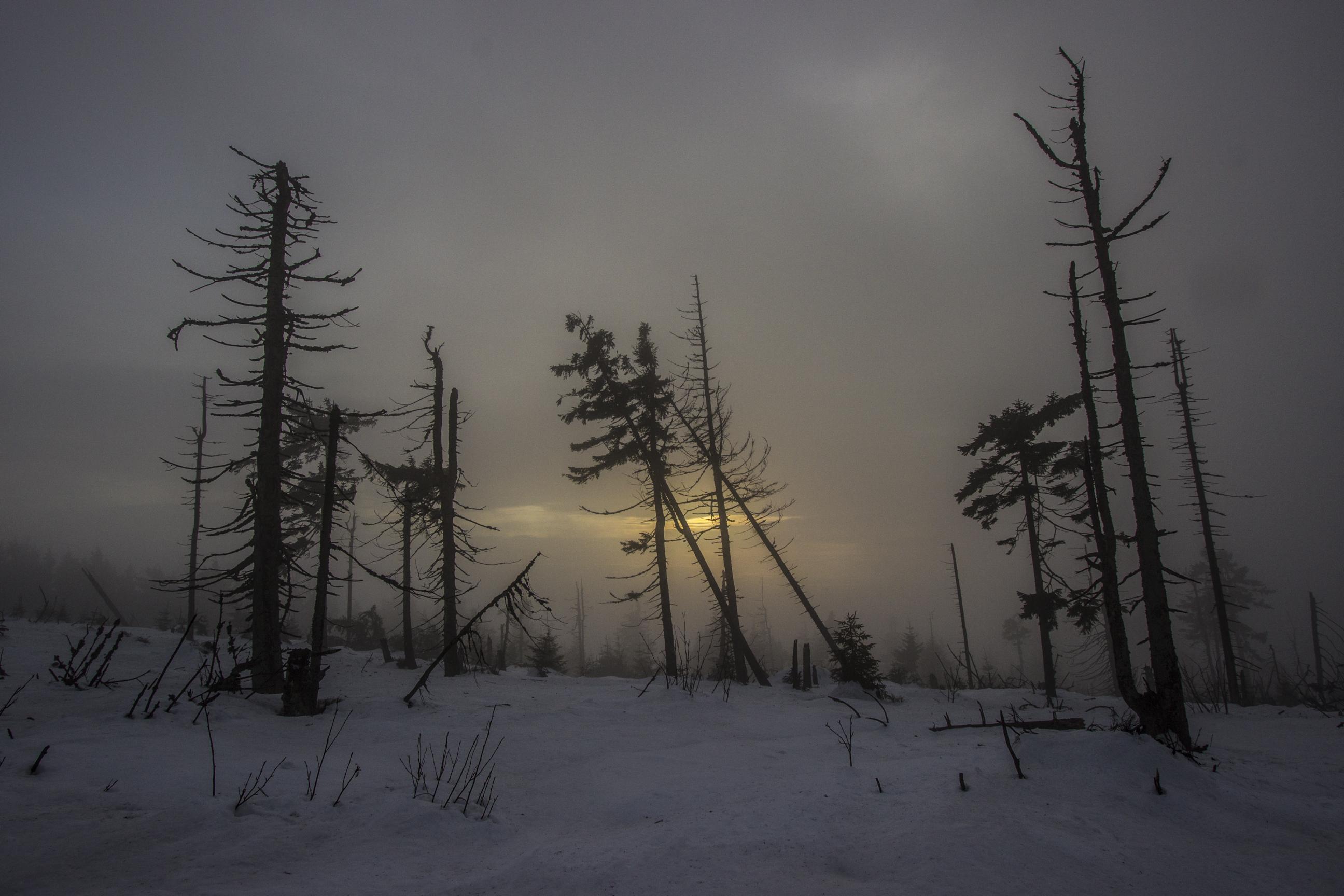Kikuty drzew i zachodzące słońce