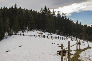 Grupa idąca w stronę lasu