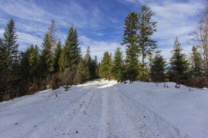 Zimowa droga przez las