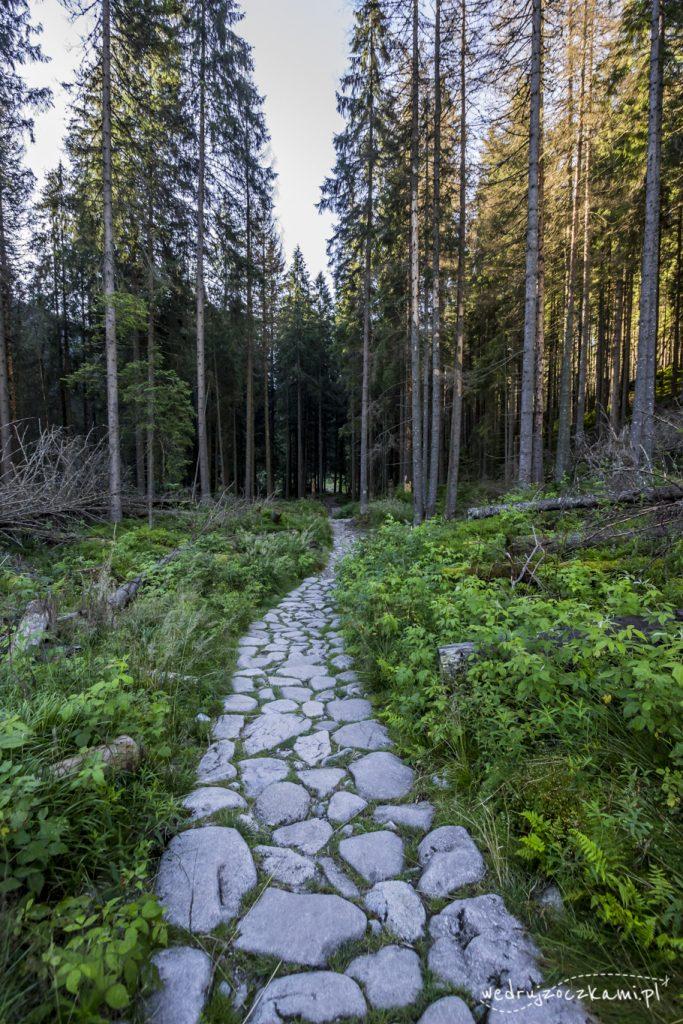 Ścieżka prowadząca do schroniska