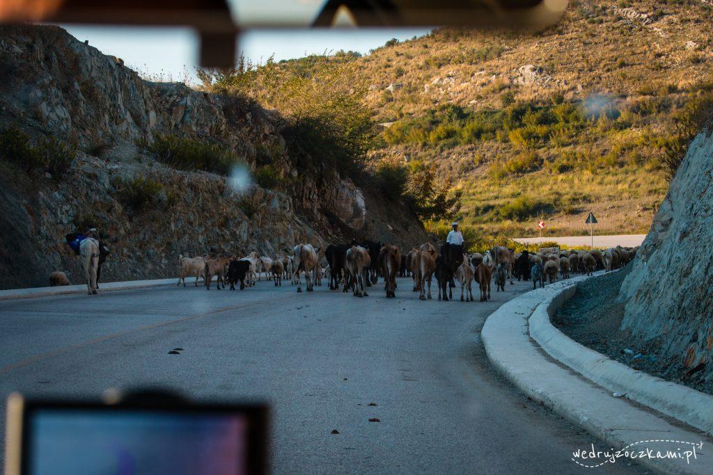 Taka sytuacja na głównej drodze w Albanii ;)