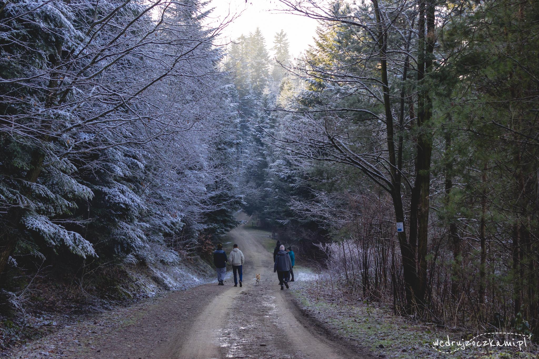 W sobotę rano zastał nas lekki mróz i oszronione drzewa, całość prezentowała się świetnie :)