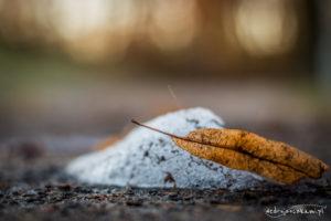 liść i śnieg