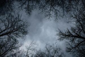 niebo i drzewa