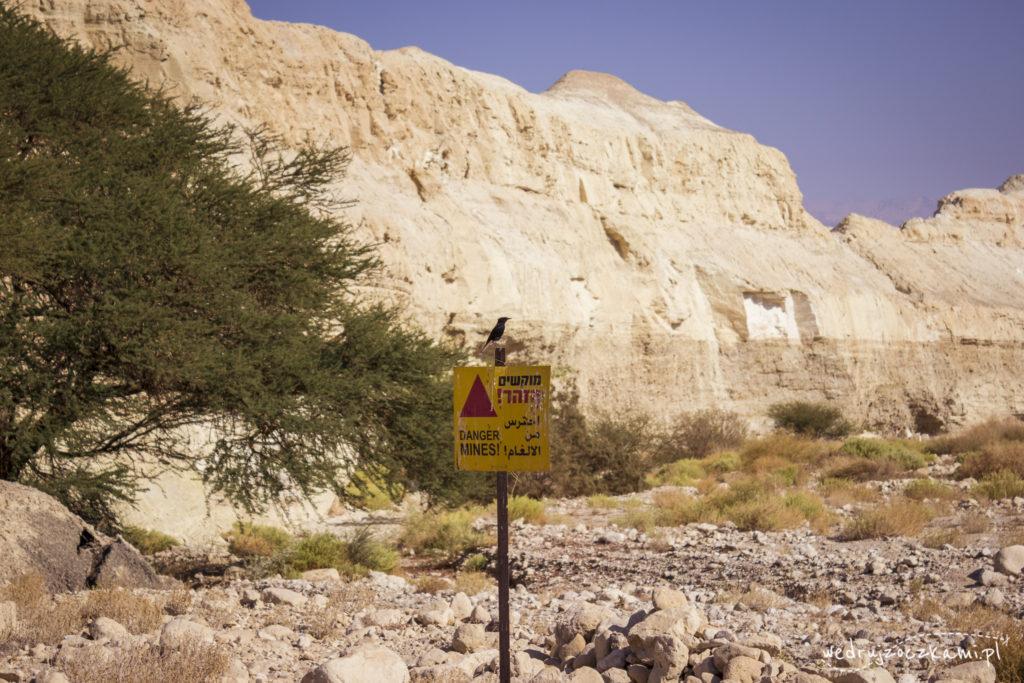 pola minowe, Izrael