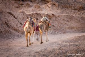 Piersze spotkanie z wielbłądami ;)
