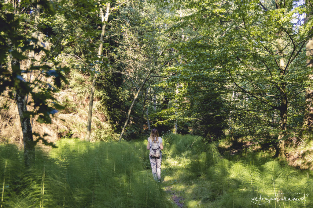 Las Bronaczowa - Asia w bajecznych paprociach i iglakach