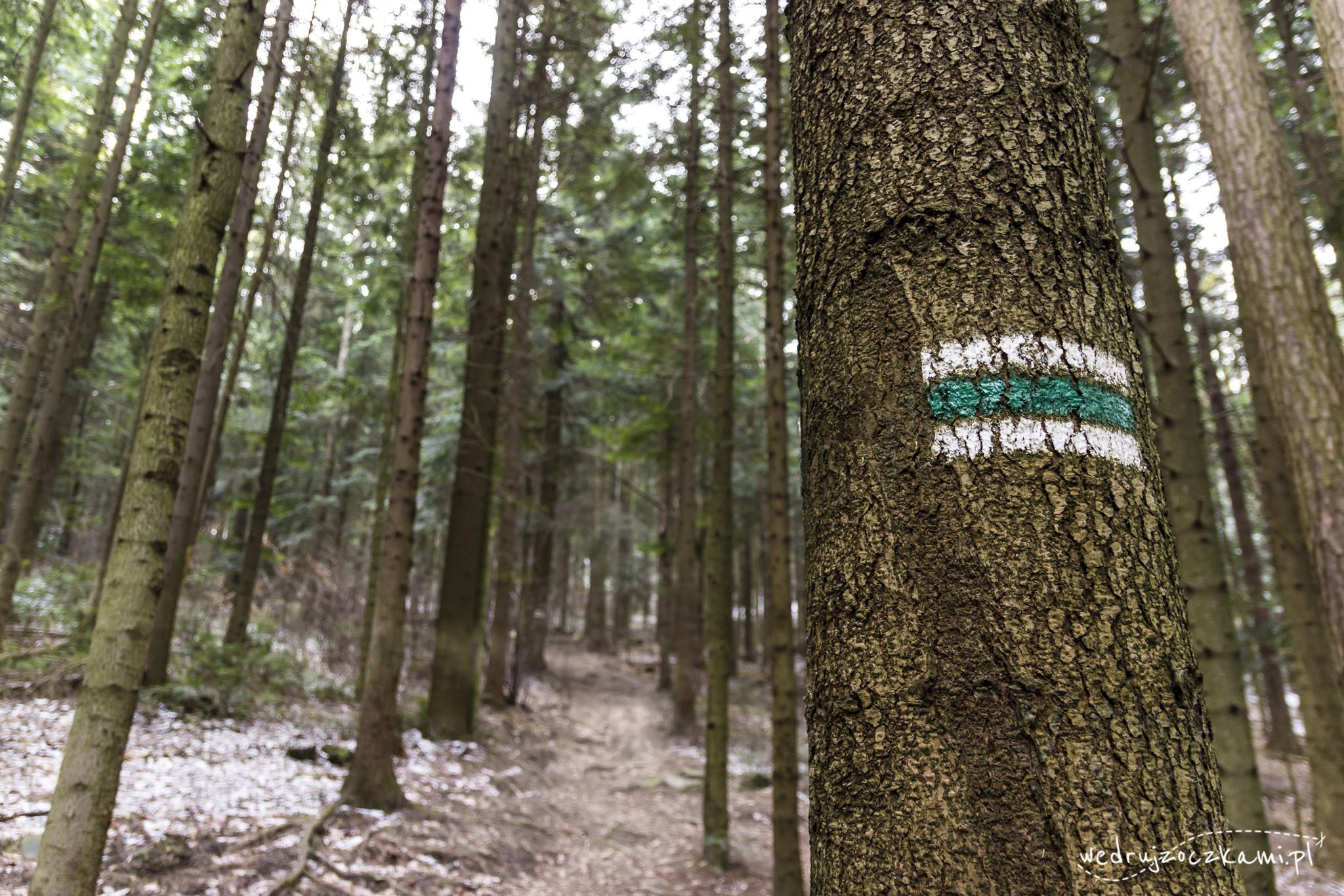 Drzewo z zielonym szlakiem