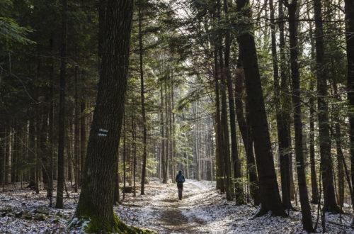 Mężczyzna idący przez las