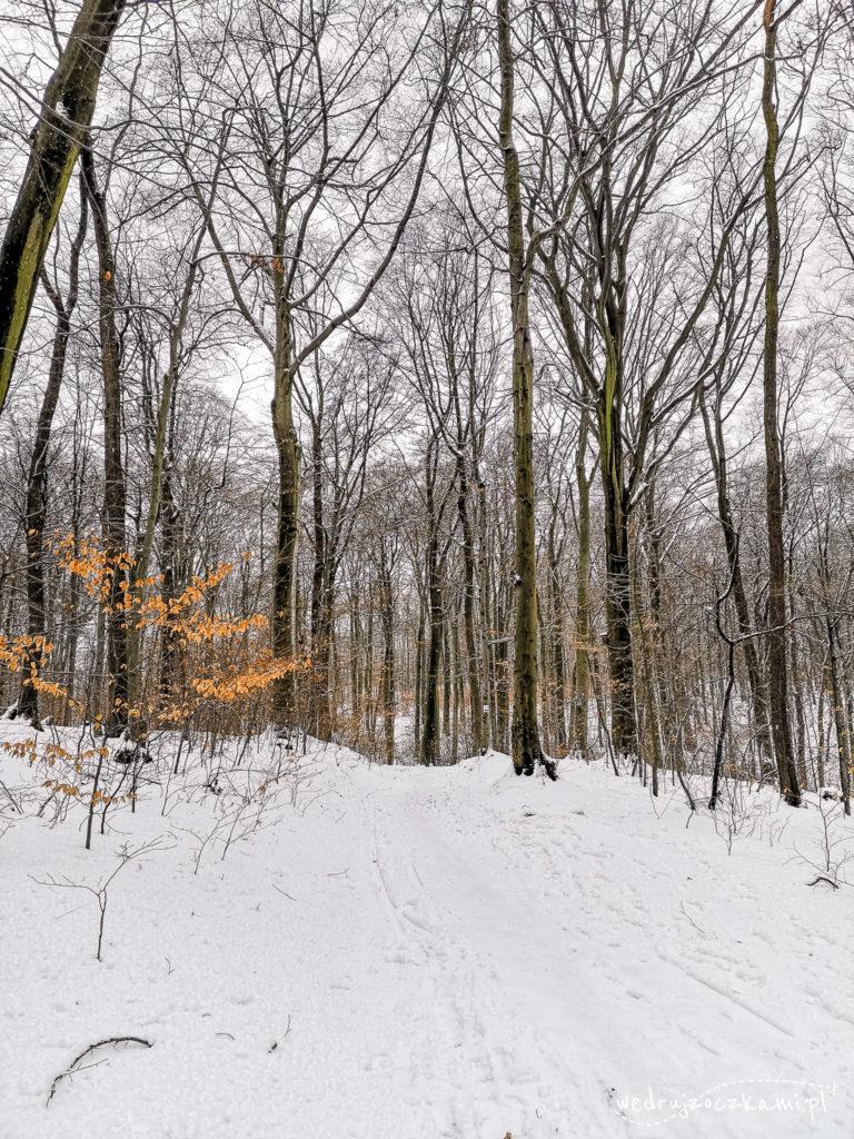 Zimowy Las Wolski