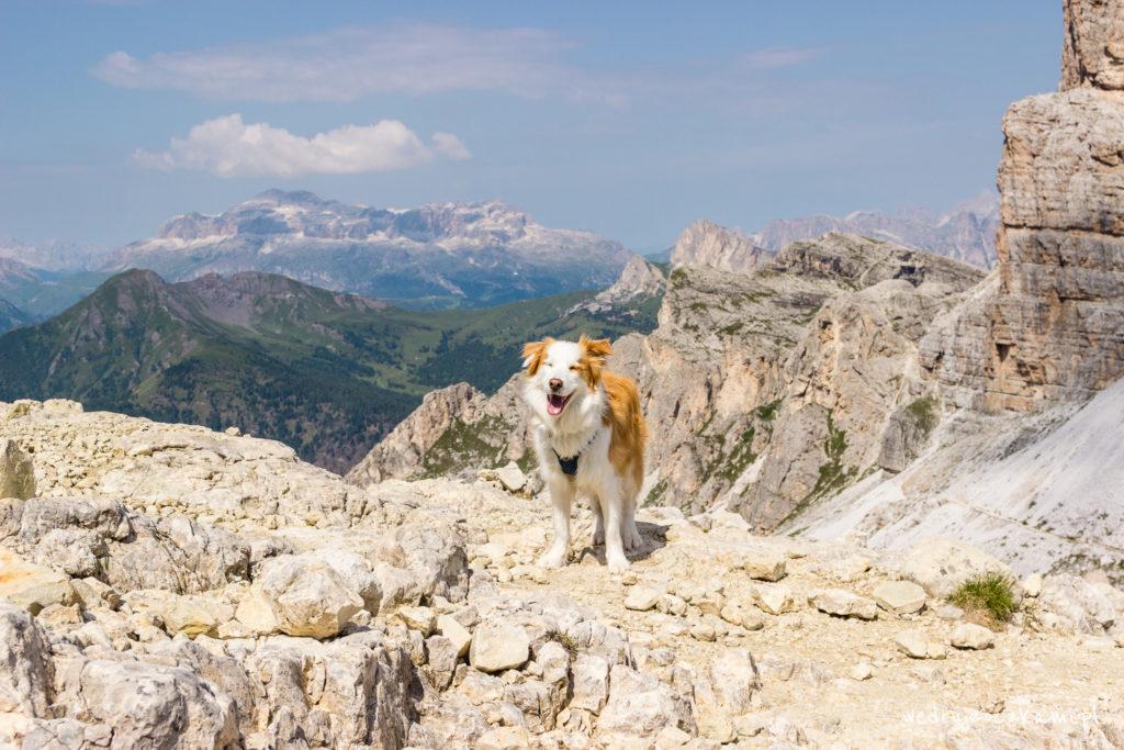 Lupo zawsze taki szczęśliwy, a w górach najbardziej! :)