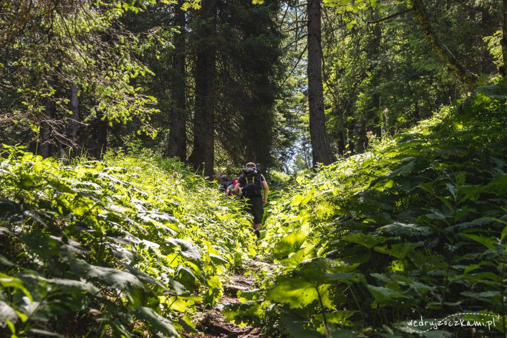 Oczko w lesie