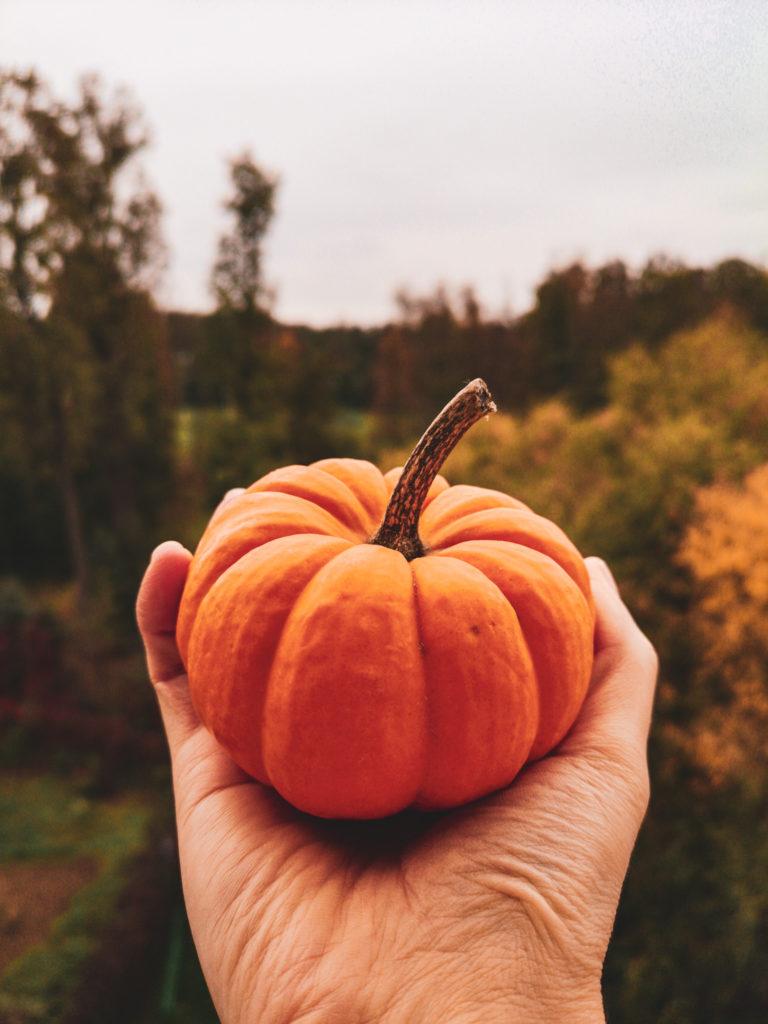 dynia, jesień