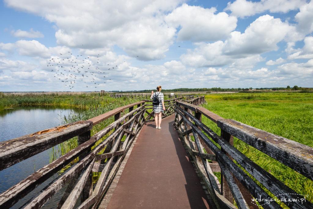 Ptaki w Narwiańskim Parku Narodowym