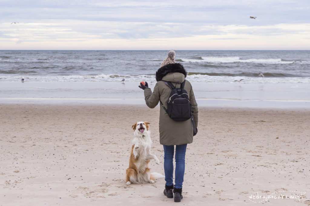 kołobrzeg - plaża, pies
